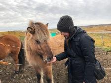 Icelandic Horse & Kelli
